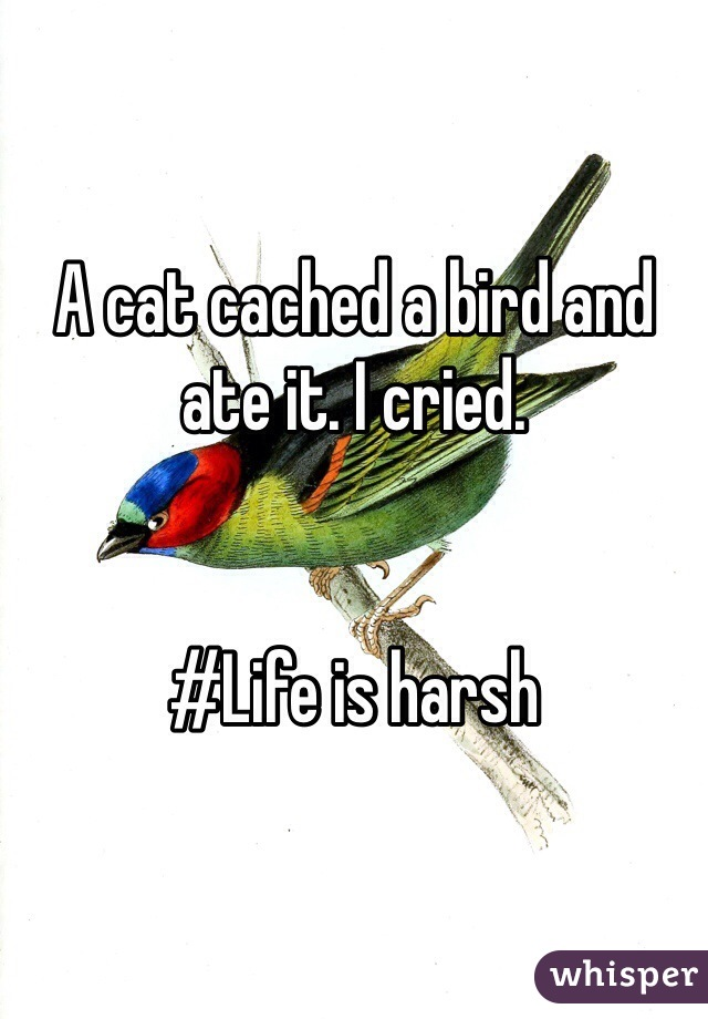 A cat cached a bird and ate it. I cried.    #Life is harsh