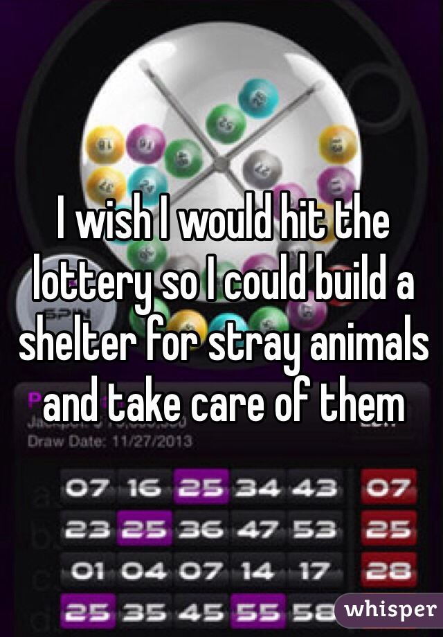 I wish I would hit the lottery so I could build a shelter for stray animals and take care of them