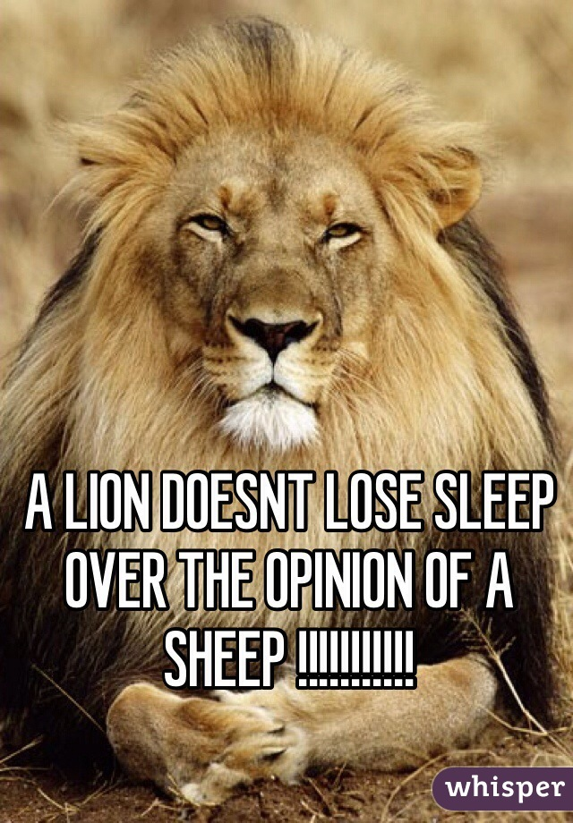 A LION DOESNT LOSE SLEEP OVER THE OPINION OF A SHEEP !!!!!!!!!!!
