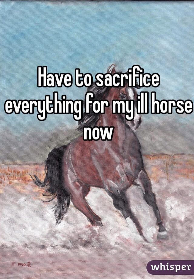 Have to sacrifice everything for my ill horse now