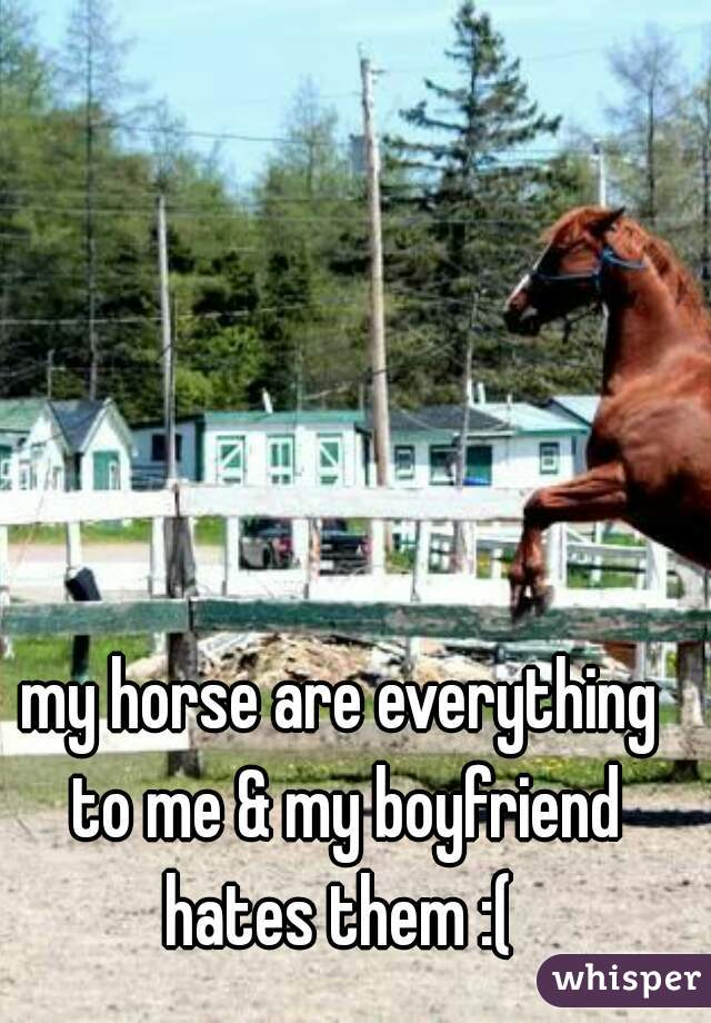 my horse are everything to me & my boyfriend hates them :(