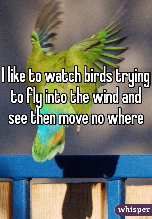 I like to watch birds trying to fly into the wind and see then move no where
