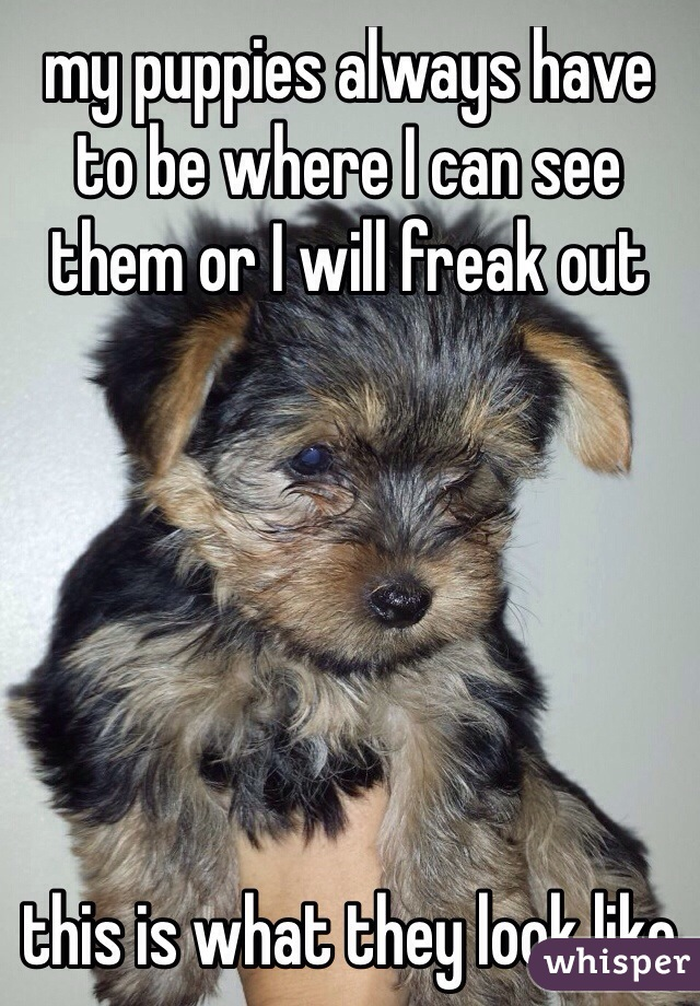 my puppies always have to be where I can see them or I will freak out         this is what they look like