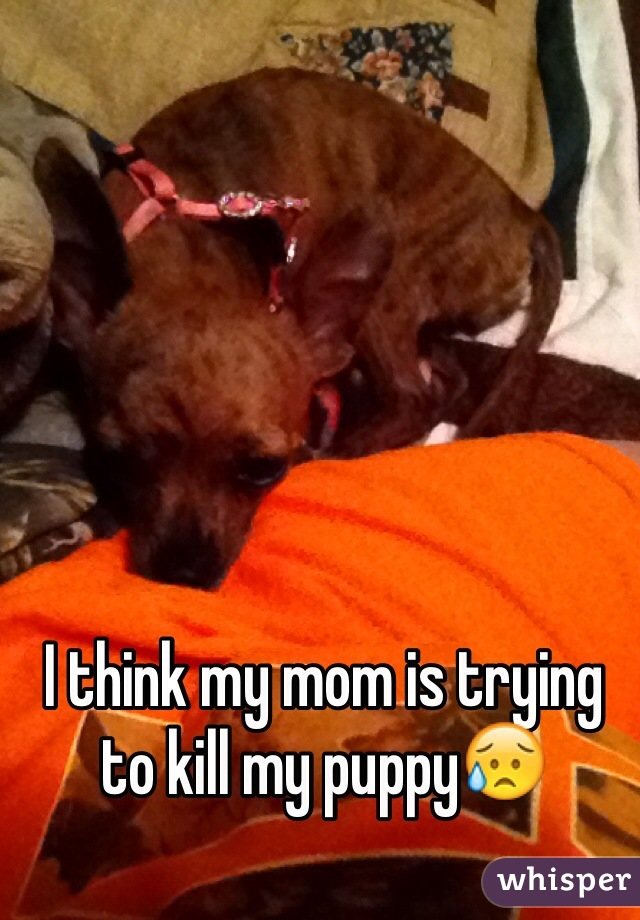 I think my mom is trying to kill my puppy😥