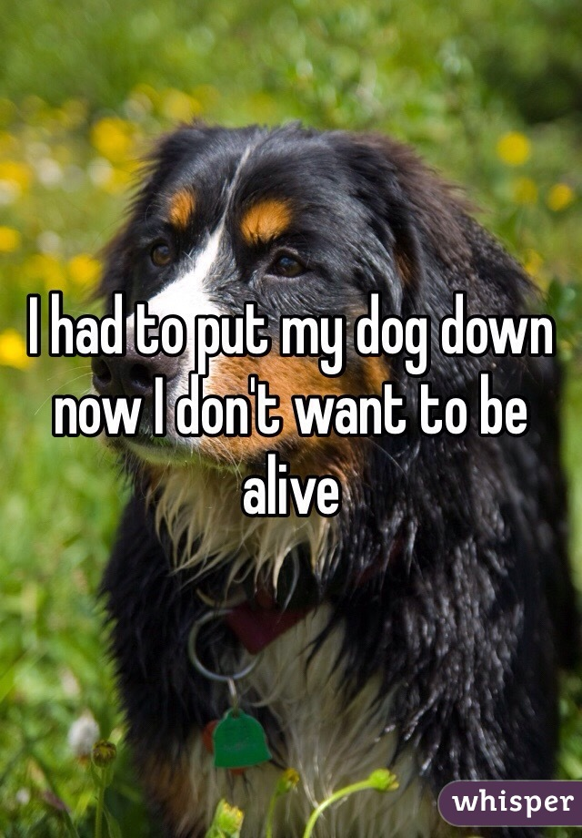I had to put my dog down now I don't want to be alive