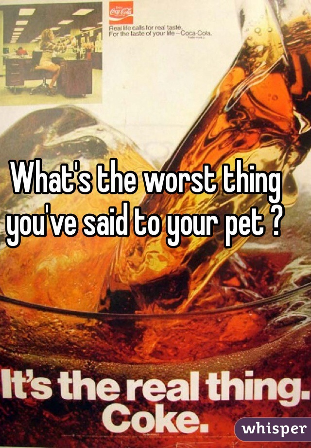What's the worst thing you've said to your pet ?
