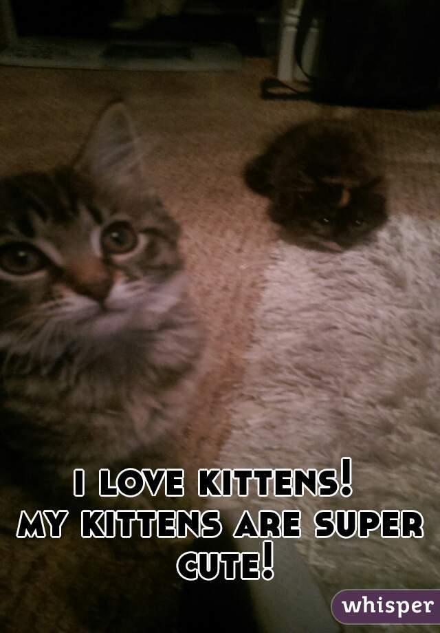 i love kittens!   my kittens are super cute!