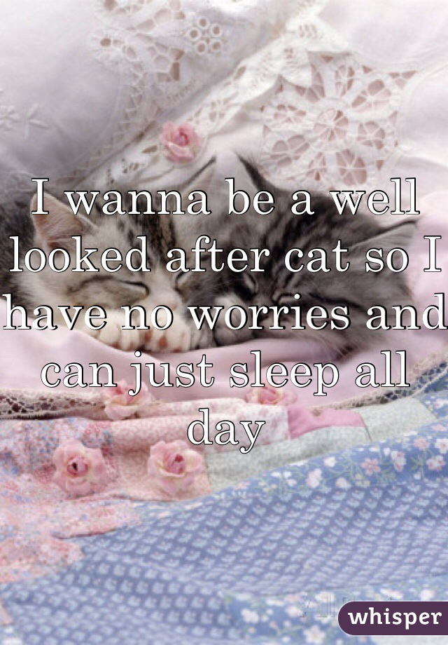 I wanna be a well looked after cat so I have no worries and can just sleep all day