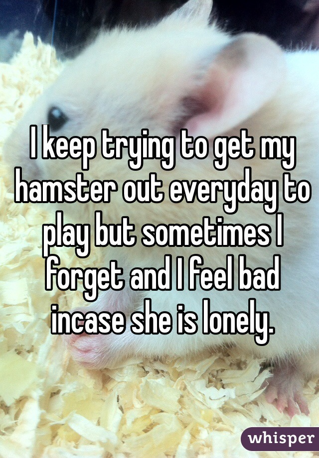 I keep trying to get my hamster out everyday to play but sometimes I forget and I feel bad incase she is lonely.