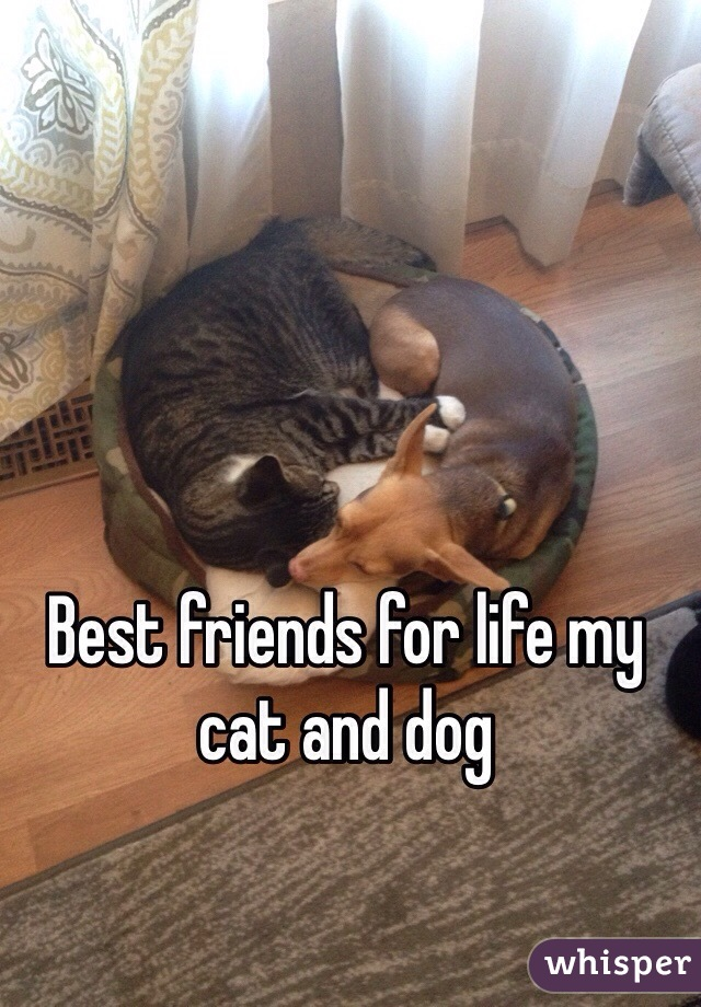 Best friends for life my cat and dog