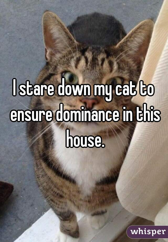I stare down my cat to ensure dominance in this house.