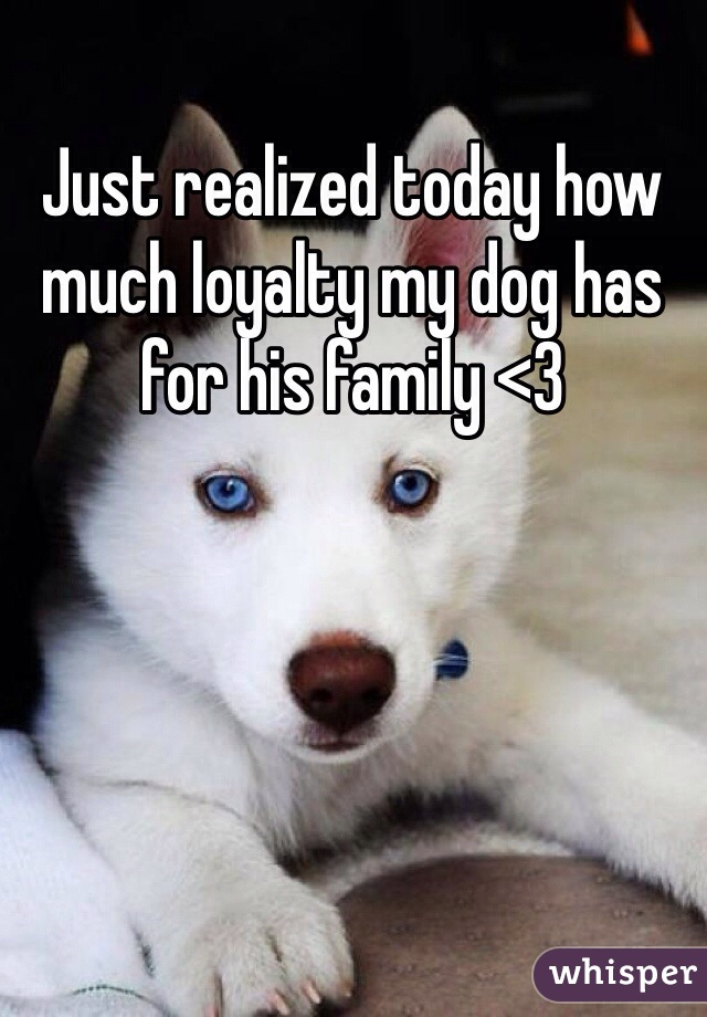 Just realized today how much loyalty my dog has for his family <3