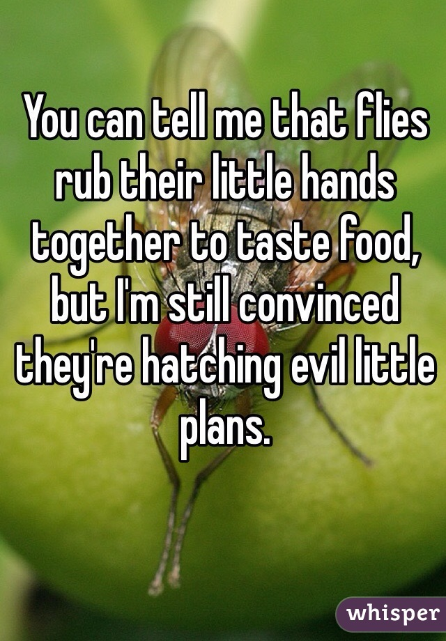 You can tell me that flies rub their little hands together to taste food, but I'm still convinced they're hatching evil little plans.