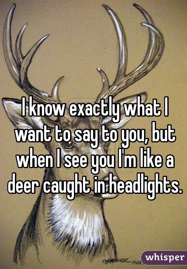 I know exactly what I want to say to you, but when I see you I'm like a deer caught in headlights.