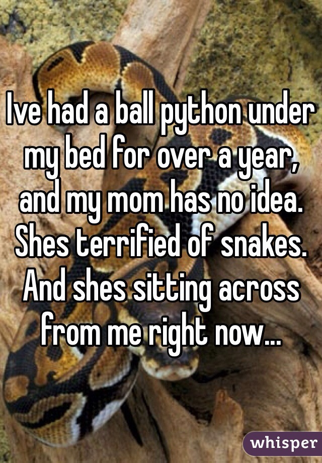 Ive had a ball python under my bed for over a year, and my mom has no idea. Shes terrified of snakes. And shes sitting across from me right now...