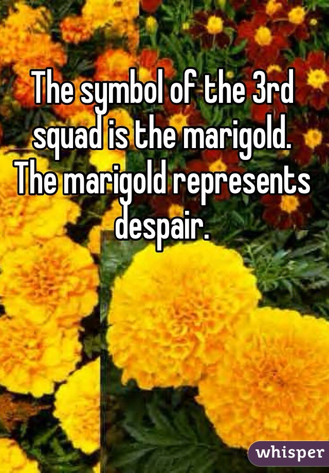 The symbol of the 3rd squad is the marigold. The marigold represents despair.