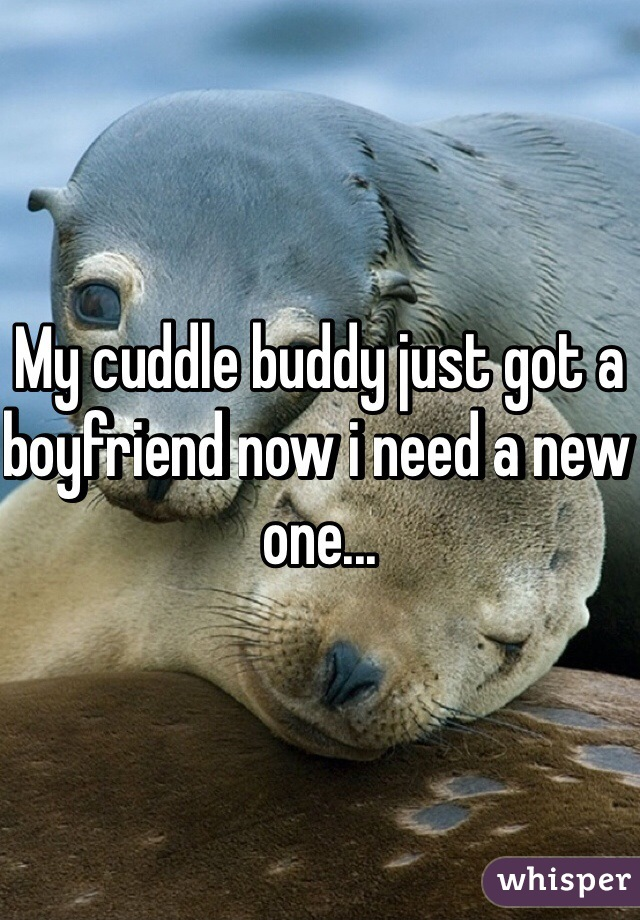 My cuddle buddy just got a boyfriend now i need a new one...