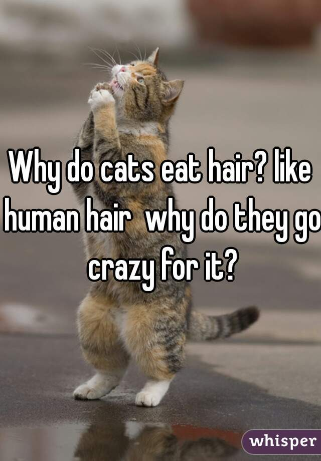 Why do cats eat hair? like human hair  why do they go crazy for it?
