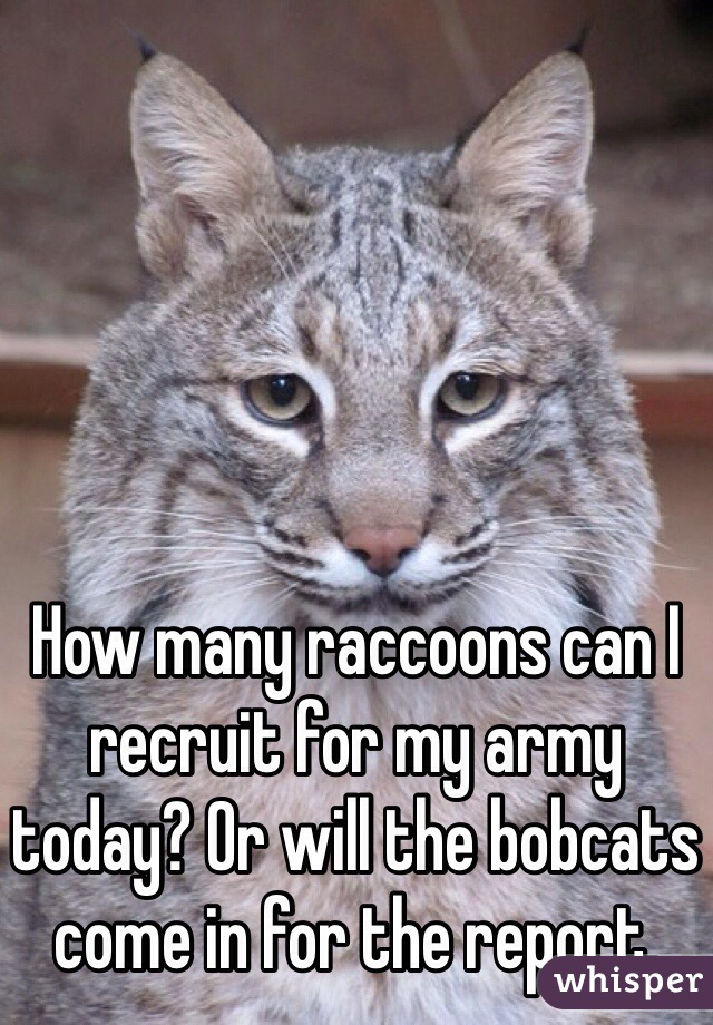 How many raccoons can I recruit for my army today? Or will the bobcats come in for the report.