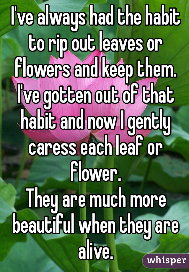I've always had the habit to rip out leaves or flowers and keep them.  I've gotten out of that habit and now I gently caress each leaf or flower.  They are much more beautiful when they are alive.