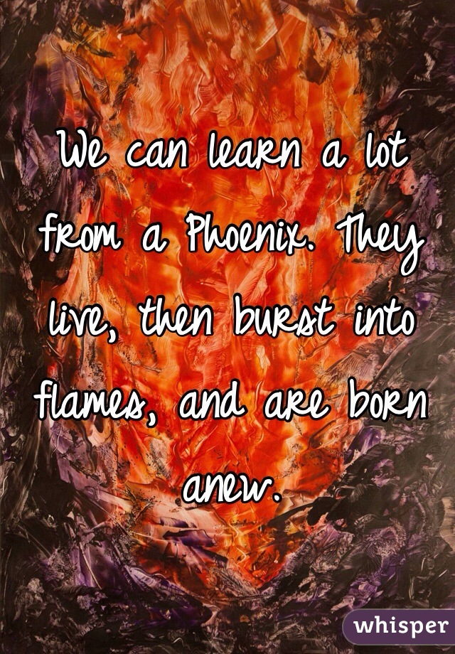 We can learn a lot from a Phoenix. They live, then burst into flames, and are born anew.