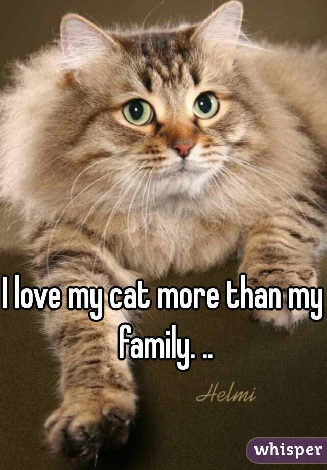 I love my cat more than my family. ..