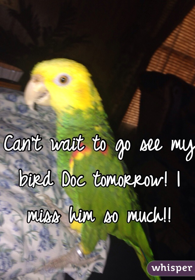 Can't wait to go see my bird Doc tomorrow! I miss him so much!!