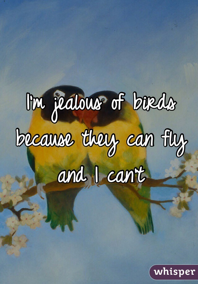 I'm jealous of birds because they can fly and I can't