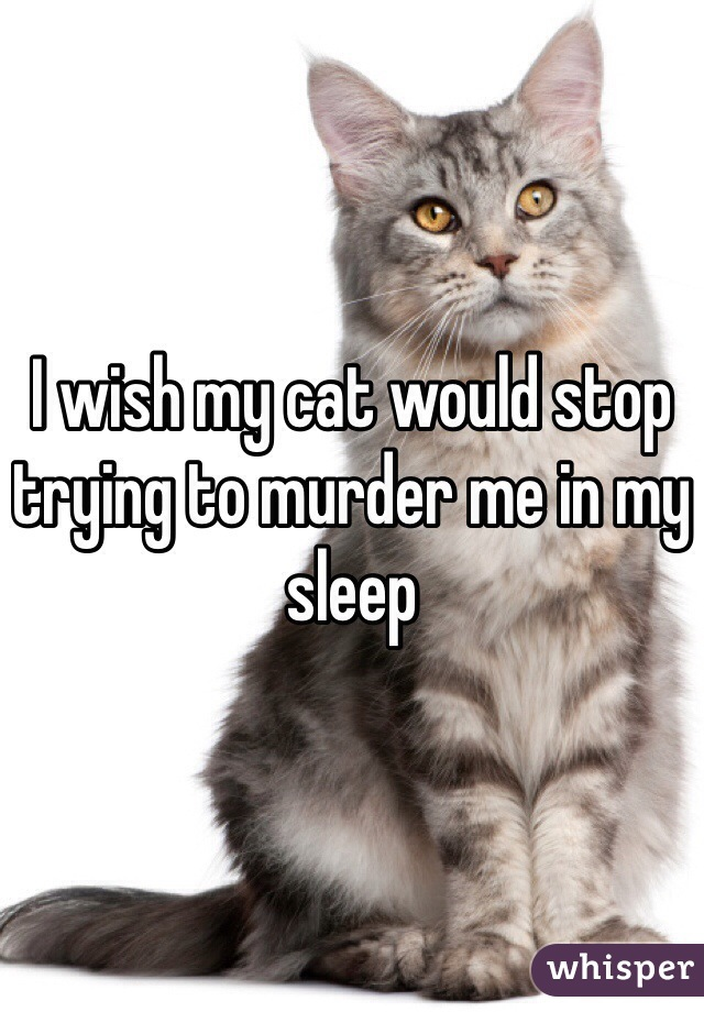 I wish my cat would stop trying to murder me in my sleep