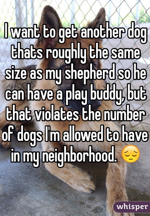 I want to get another dog thats roughly the same size as my shepherd so he can have a play buddy, but that violates the number of dogs I'm allowed to have in my neighborhood. 😔