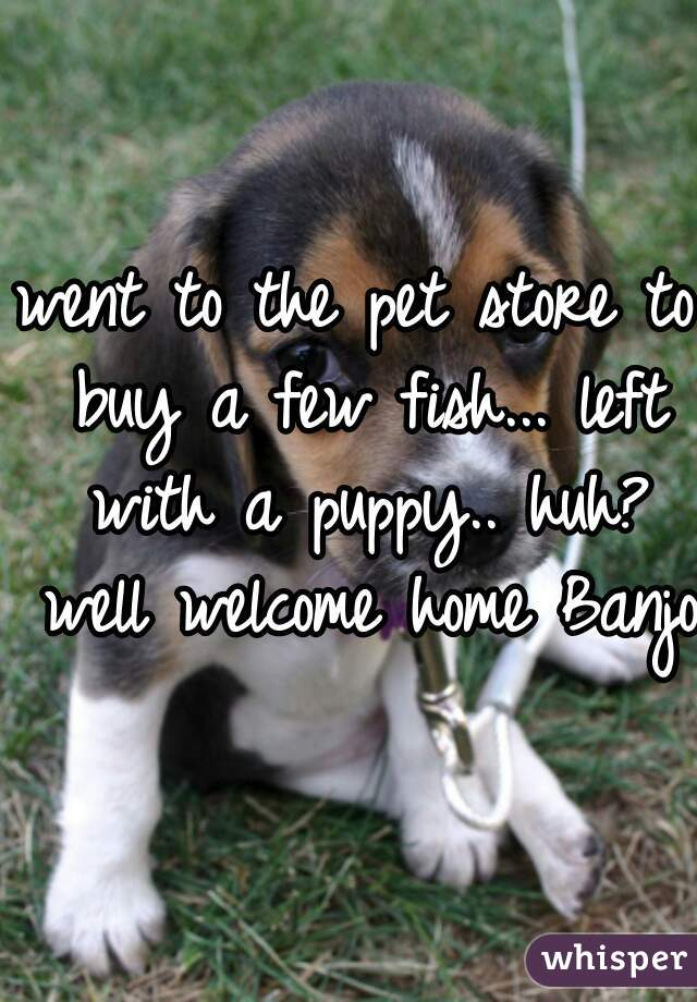 went to the pet store to buy a few fish... left with a puppy.. huh? well welcome home Banjo.