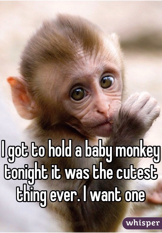 I got to hold a baby monkey tonight it was the cutest thing ever. I want one