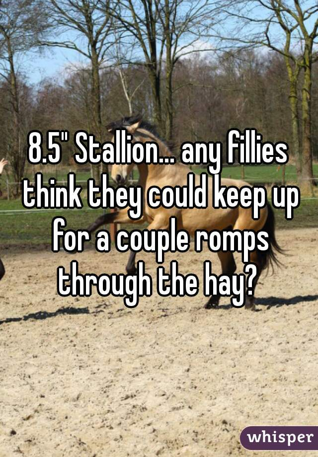 "8.5"" Stallion... any fillies think they could keep up for a couple romps through the hay?"