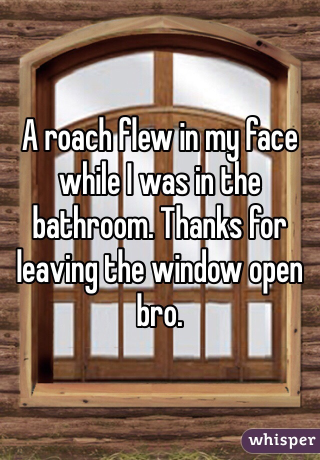 A roach flew in my face while I was in the bathroom. Thanks for leaving the window open bro.