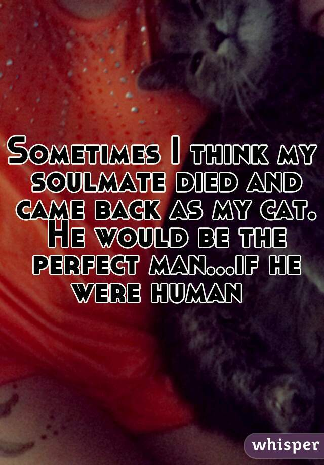 Sometimes I think my soulmate died and came back as my cat. He would be the perfect man...if he were human
