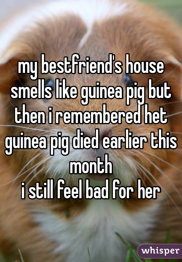 my bestfriend's house smells like guinea pig but then i remembered het guinea pig died earlier this month i still feel bad for her