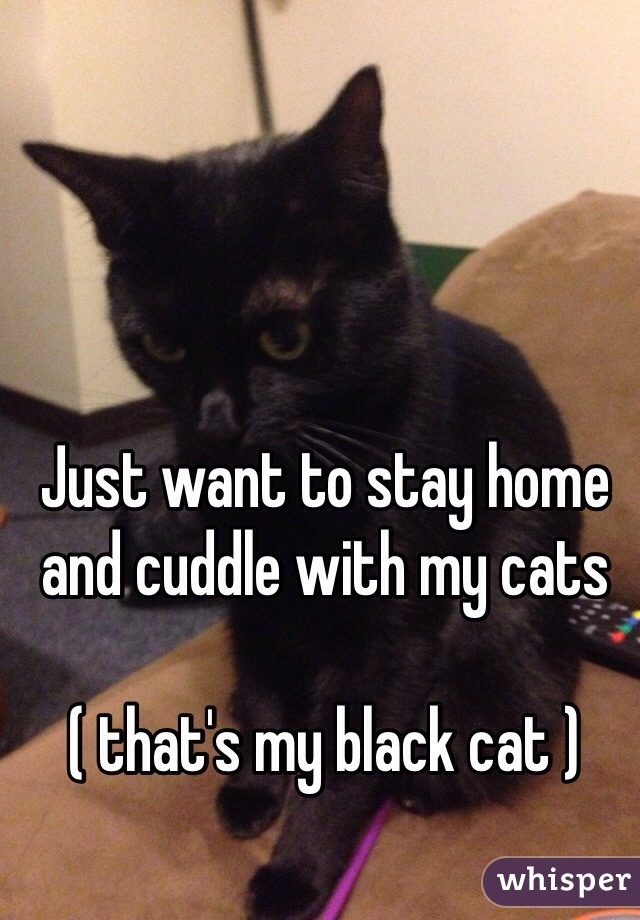 Just want to stay home and cuddle with my cats   ( that's my black cat )