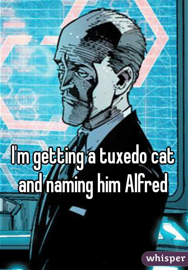 I'm getting a tuxedo cat and naming him Alfred