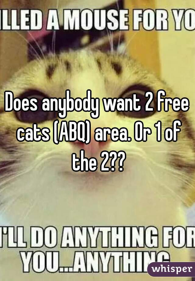 Does anybody want 2 free cats (ABQ) area. Or 1 of the 2??