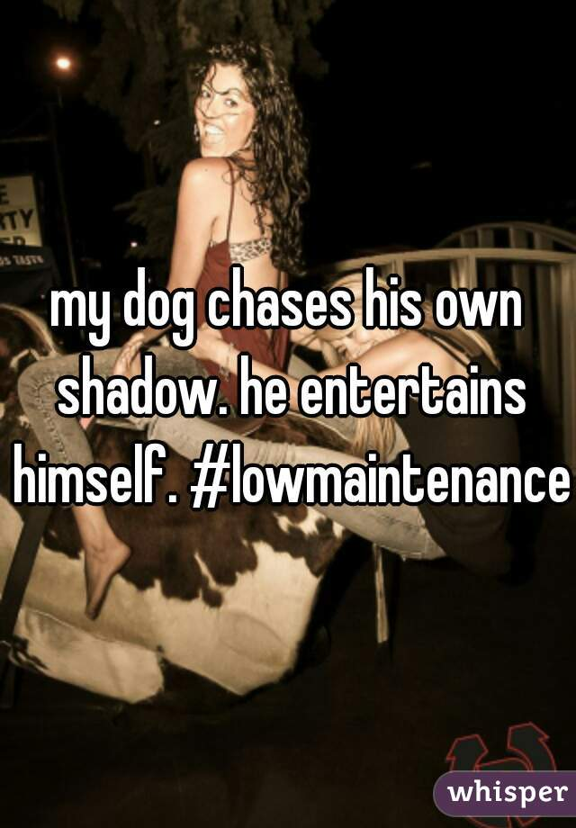 my dog chases his own shadow. he entertains himself. #lowmaintenance