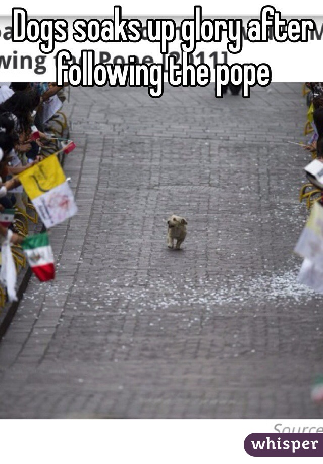 Dogs soaks up glory after following the pope