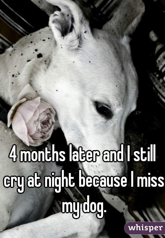 4 months later and I still cry at night because I miss my dog.