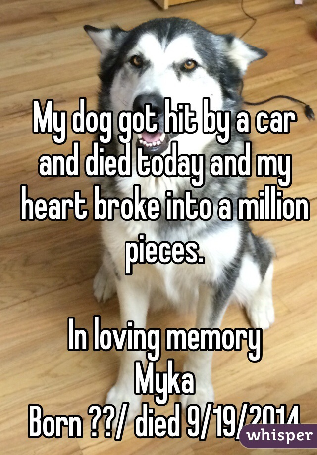 My dog got hit by a car and died today and my heart broke into a million pieces.   In loving memory Myka  Born ??/ died 9/19/2014