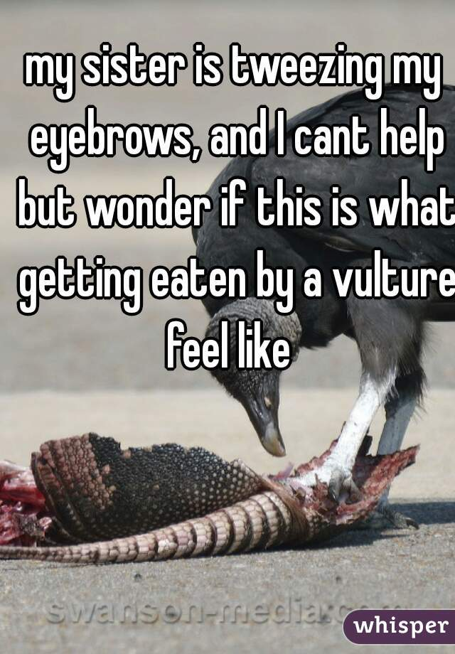 my sister is tweezing my eyebrows, and I cant help but wonder if this is what getting eaten by a vulture feel like