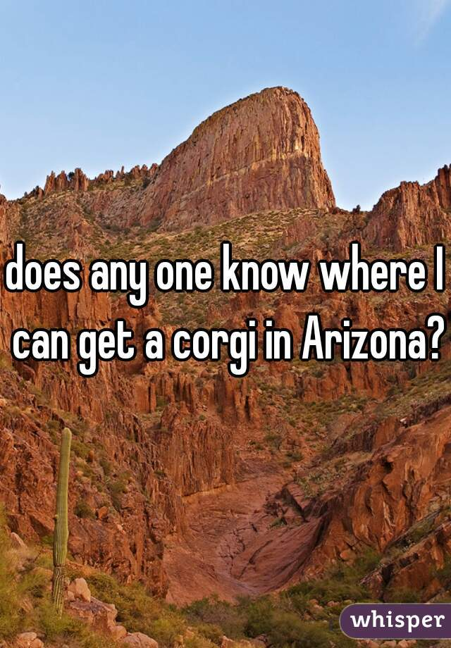 does any one know where I can get a corgi in Arizona?