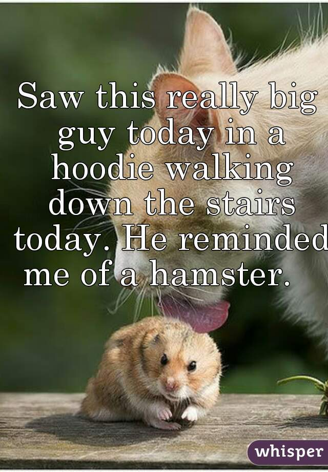 Saw this really big guy today in a hoodie walking down the stairs today. He reminded me of a hamster.