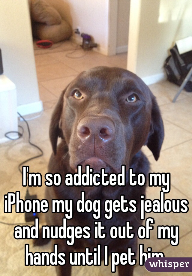 I'm so addicted to my iPhone my dog gets jealous and nudges it out of my hands until I pet him.