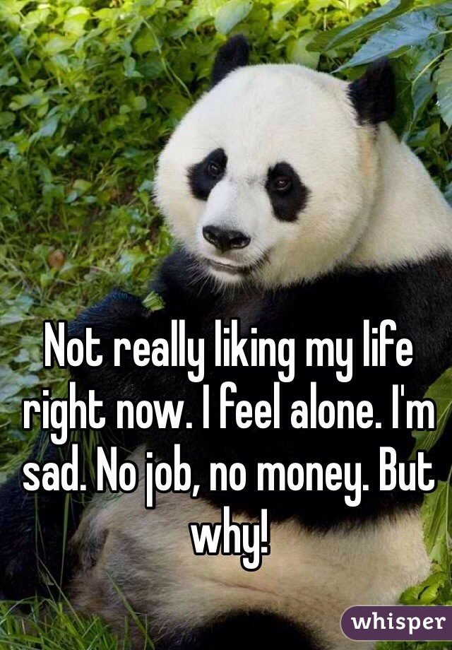 Not really liking my life right now. I feel alone. I'm sad. No job, no money. But why!