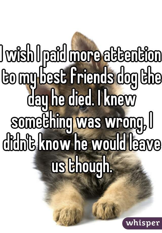 I wish I paid more attention to my best friends dog the day he died. I knew something was wrong, I didn't know he would leave us though.