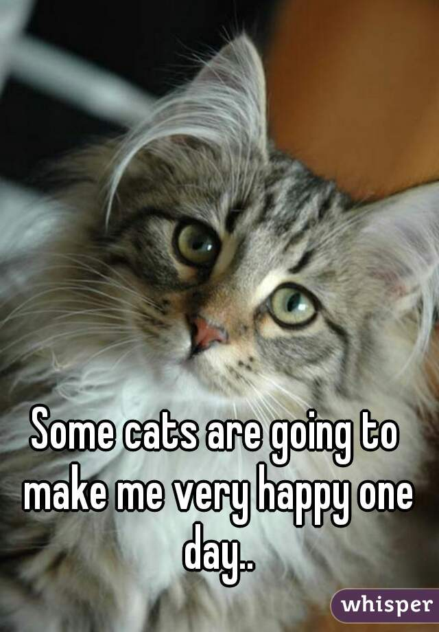 Some cats are going to make me very happy one day..